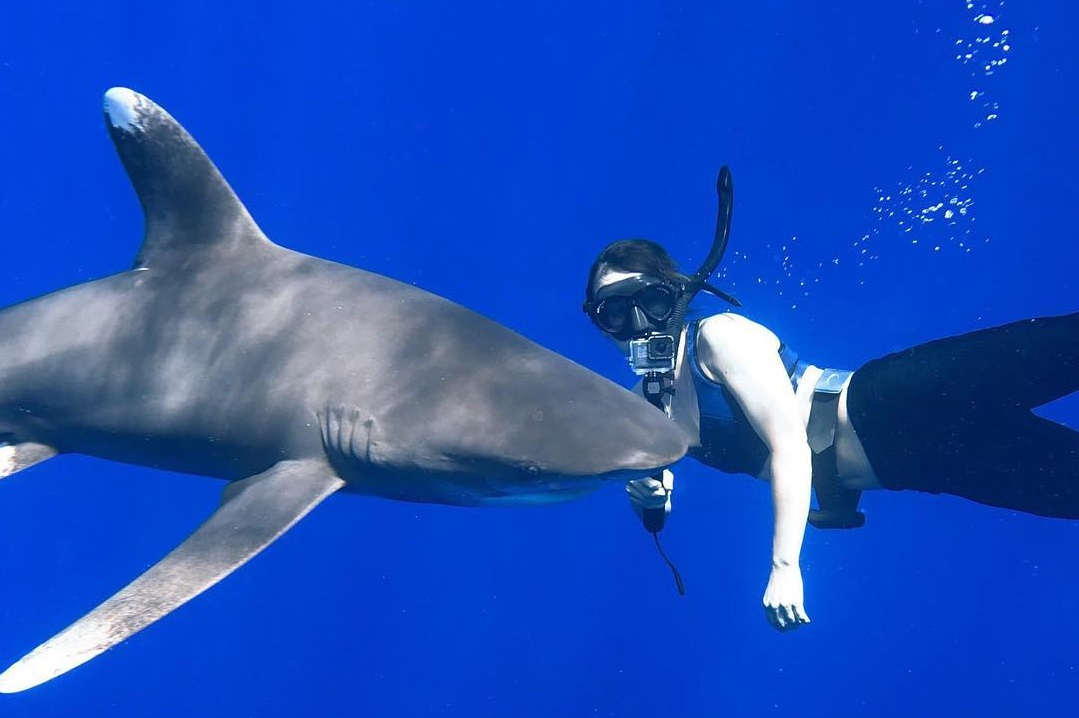 An image of a Kona Shark Diver swimming with an oceanic whitetip off of the Big Island of Hawaii.