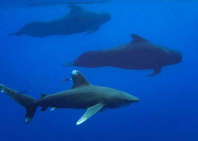 meet-your-shark-diving-partners-image