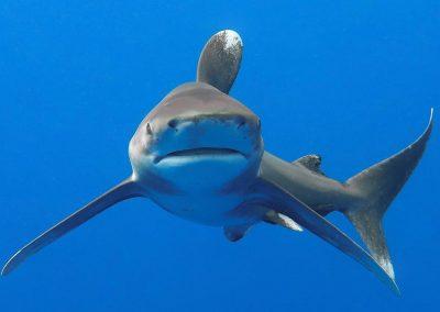 the-kona-shark-diving-experience